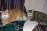 My Kitties happy to have their favorite blanket back on their favorite Futon.