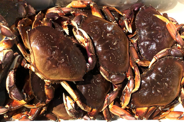 A Cast of Crab!